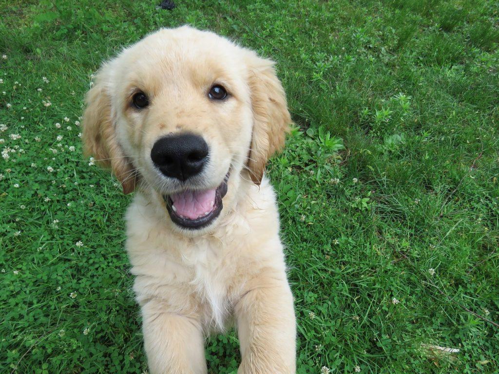 ¿Tienes nueva mascota? 5 Productos básicos para el cuidado de tu perro en cuantocuesta.info