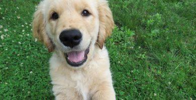 ¿Tienes nueva mascota? 5 Productos básicos para el cuidado de tu perro